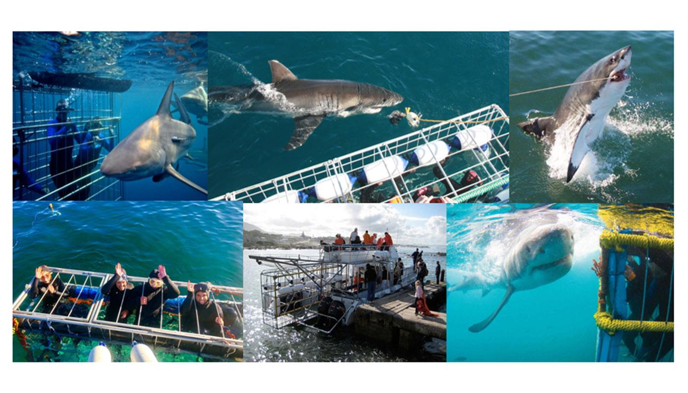 ADRENALINE HUNTING ? ... SHARK CAGE DIVING !