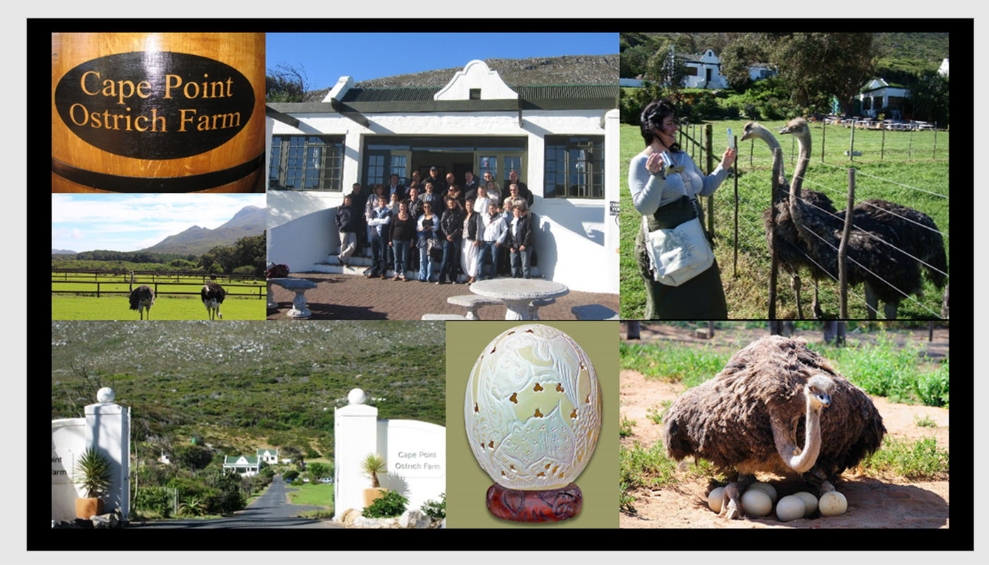 OSTRICH FARM VISITING – MEAT TASTING AND SHOPPING !