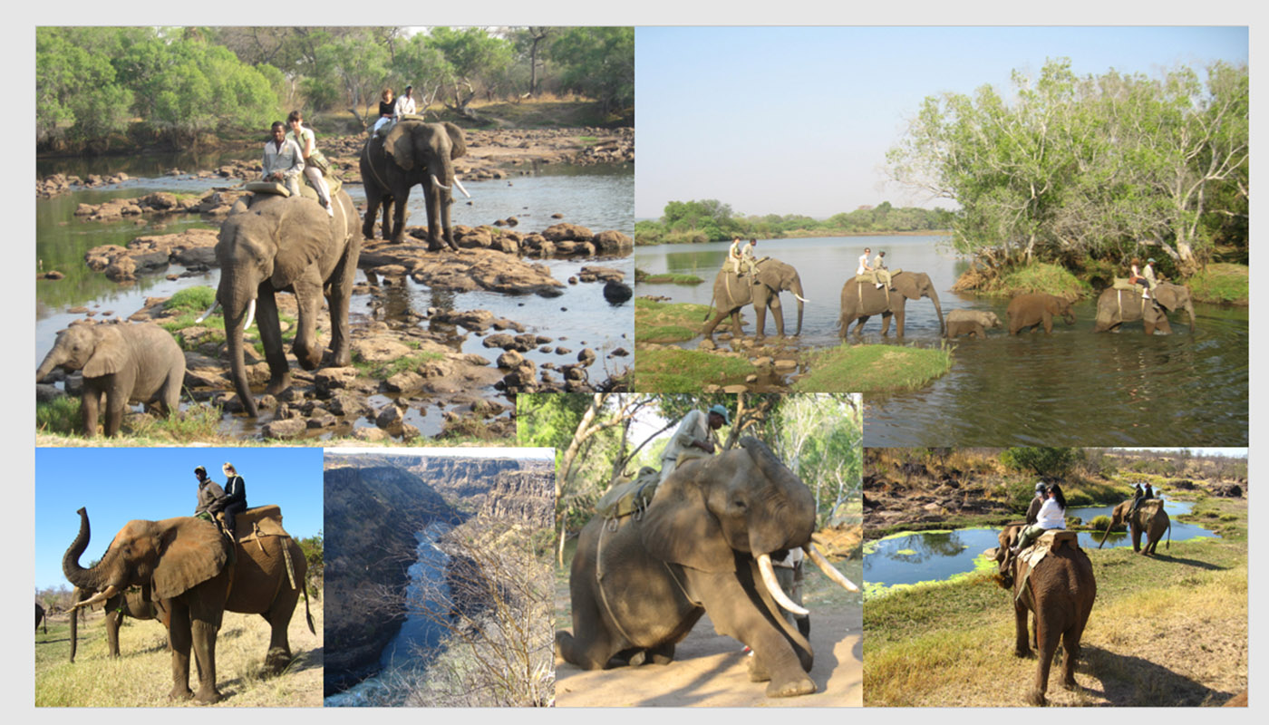ELEPHANT BACK SAFARI IN ZIMBABWE