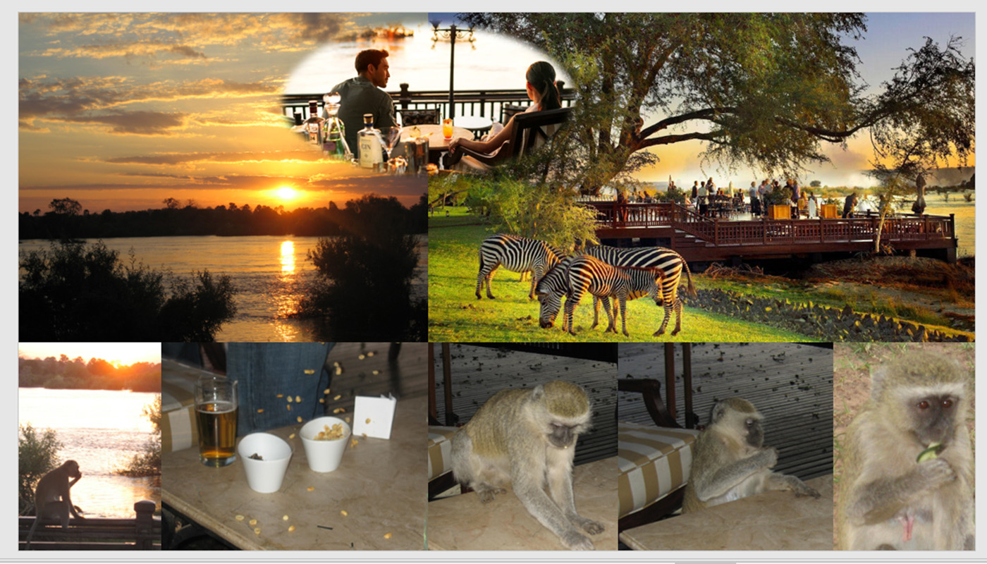 SHARE SUNDOWNER BY THE RIVER WITH NAUGHTY FUNNY MONKEYS …